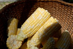 dish(0.0), snack food(0.0), sweet corn(1.0), food grain(1.0), vegetarian food(1.0), maize(1.0), corn on the cob(1.0), produce(1.0), food(1.0), corn on the cob(1.0), cuisine(1.0),