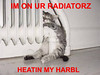 I'm on ur radiatorz by Beth E. Dogg