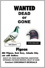 Bengals Pigeon Poop Poster