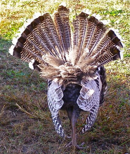 Turkey in Display