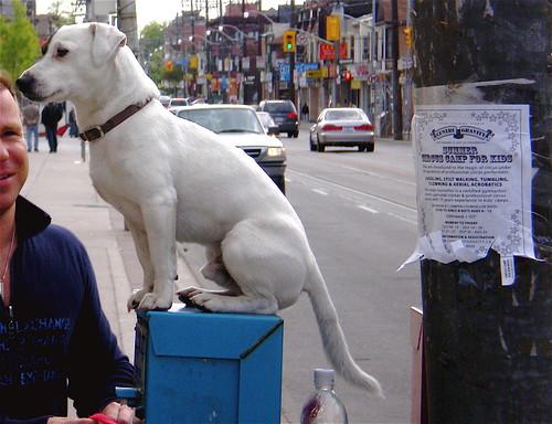 Sit, Ubu, Sit. Good Dog.