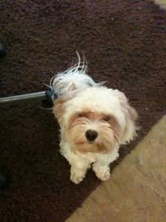Cutest dog ever!