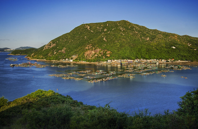 Lamma Island Ferry Hours