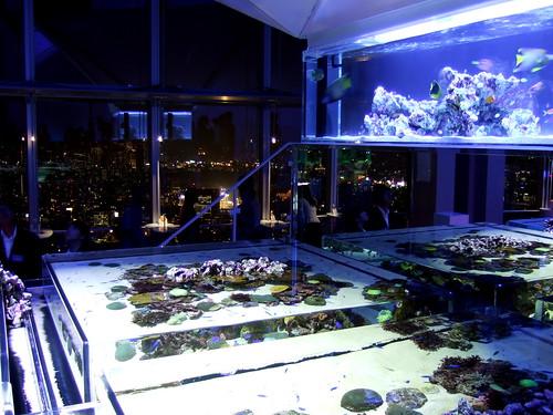 Sky Aquarium at Roppongi Hills