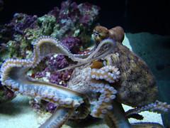marine biology(0.0), animal(1.0), seafood(1.0), octopus(1.0), organism(1.0), invertebrate(1.0), marine invertebrates(1.0), fauna(1.0), reef(1.0),