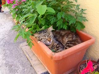 gatto al fresco