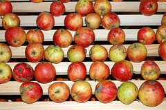 plant(0.0), purple mangosteen(0.0), produce(1.0), fruit(1.0), food(1.0), myrciaria dubia(1.0), apple(1.0),