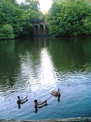 Evening Walk - Hampstead Heath and environs