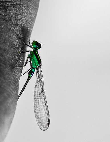 green bug finger 36 rotated dfc explored gogogogo 105vr babydragonfly postindfc