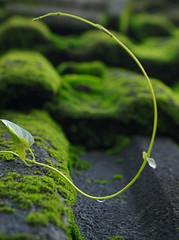 algae, leaf, green, moss,