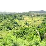 Hình ảnh của Flower Forest gần Hillaby. barbados bathsheba flowerforest