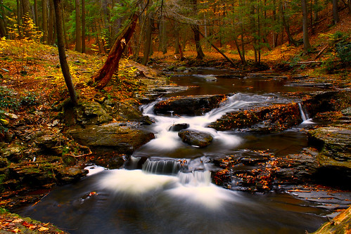 longexposure autumn light red leaves yellow creek forest river waterfall lowlight woods october colorful glow hiking pennsylvania stones pa