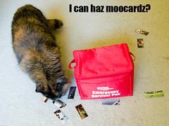 I can haz moocardz?