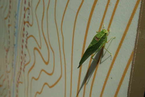 Katydid on trail map sign