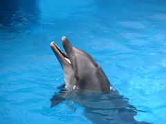 spinner dolphin(0.0), animal(1.0), marine mammal(1.0), common bottlenose dolphin(1.0), marine biology(1.0), short-beaked common dolphin(1.0), dolphin(1.0), stenella(1.0), rough-toothed dolphin(1.0), tucuxi(1.0),