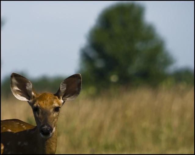 Dig Deer