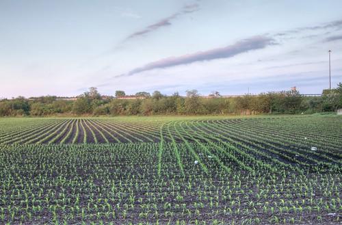 field corn il hdr mattoon