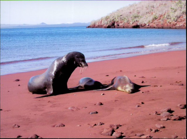 Seals on Red Beach