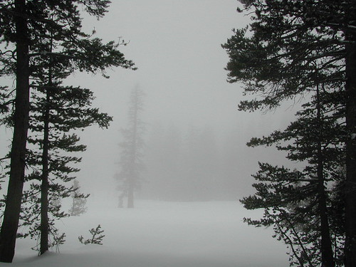 Foggy Meadows w/ Snow
