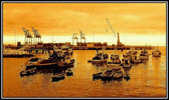 °° Golden Port °°