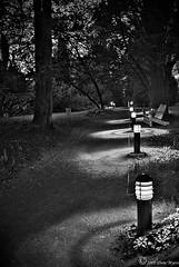 A Quiet Evening at the Arboretum