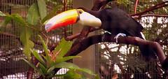 hornbill(0.0), rainforest(0.0), flower(0.0), jungle(0.0), wildlife(0.0), zoo(1.0), toucan(1.0), fauna(1.0), bird(1.0),