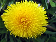 Flowers of San Francisco