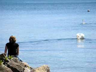 Image of Plage du Pélican near Saint-Sulpice (VD). lake beach switzerland swan europe suisse geneva lac lausanne léman plage cygne stsulpice lakegeneva vaud pélican