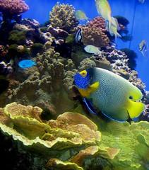 Coral explorers, Ocean Life