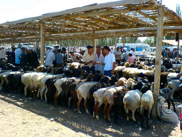 Kashgar's Sunday Livestock Market