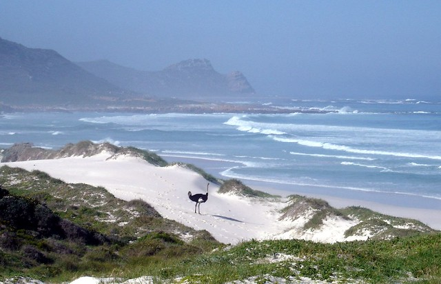 South Africa 2005