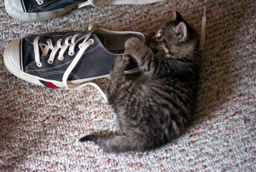 Shoe Attack, November 11, 2010