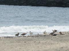 sea gulls