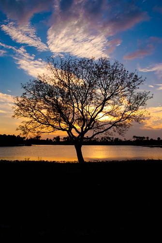 park trees sunset okeeheelee