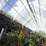 The fruits & vegetables section of the Glasshouse