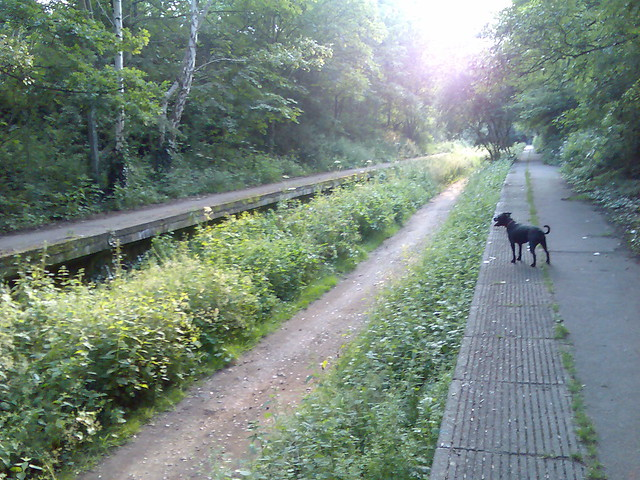 Finsbury Park Dog Walking Jobs