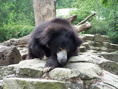 brown bear(0.0), animal(1.0), american black bear(1.0), mammal(1.0), fauna(1.0), sloth bear(1.0), bear(1.0), wildlife(1.0),