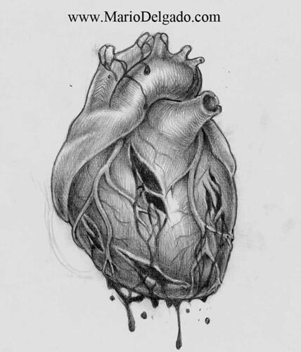 broken human heart sketch, Muscles