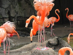 flamingo chick019