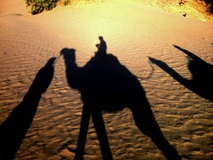 desert shade