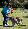 Morisset Roos - 0036 - 2010_11_07_4604 by wazonthehill