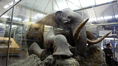 art, elephant, museum, elephants and mammoths, sculpture, mammoth, statue,