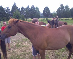 animal, mane, mare, pack animal, horse, pasture,