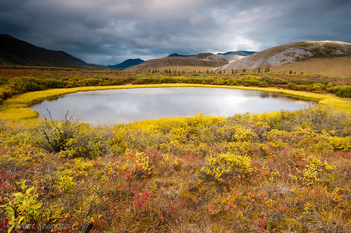 Golden Yukon Pond