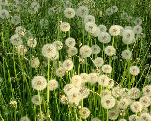 Fields of softness