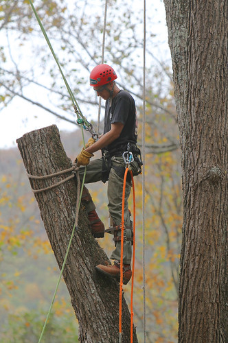 Arborists at Work 2