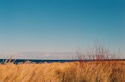 november cold film nikon bluesky balticsea latvia fm2 yellowgrass