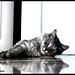 """""""Cats are connoisseurs of beauty"""" by ßa§oomZ ™..♥"""