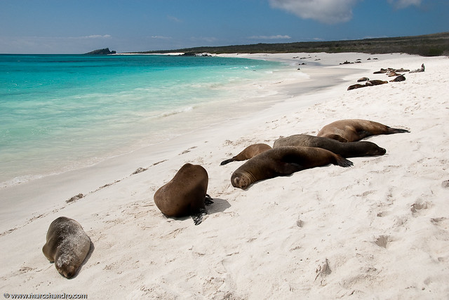Galapagos Beach Sea Lions