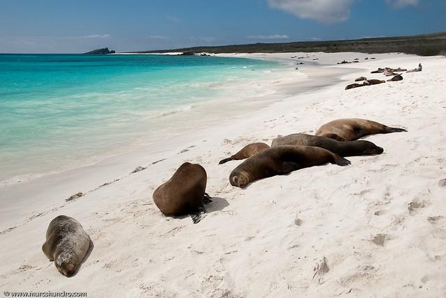 Galapagos Beach Sea Lions
